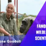 Jane Goodall – Famous Wildlife Scientist